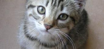 Insolite ! Une banque russe prête un chat pour tout emprunt immobilier contracté