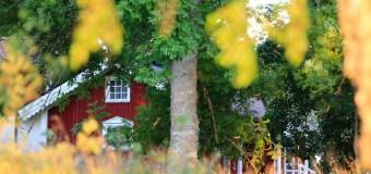 Débroussaillage des terrains : rappel des obligations des propriétaires
