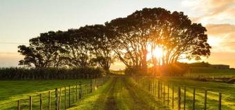 Terrains à bâtir : c'est le moment de vendre